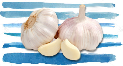 Foods To Increase Immunity- Fresh Garlic