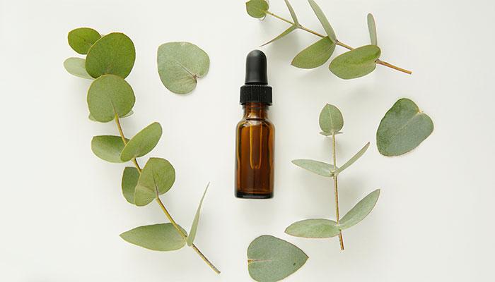 eucalyptus oil benefits for hair