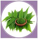neem leaf extract benefits