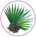 Saw Palmetto Extract for hair