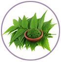 Neem Extract for hair