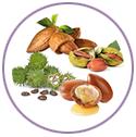 Sweet Almond, Castor, Jojoba and Argan Oils for hair