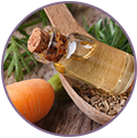 Carrot Seed Extract