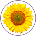 Sunflower Biolipids