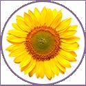 Sunflower Biolipids