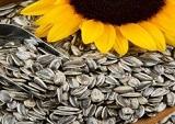 Surajmukhi (Sunflower seeds)